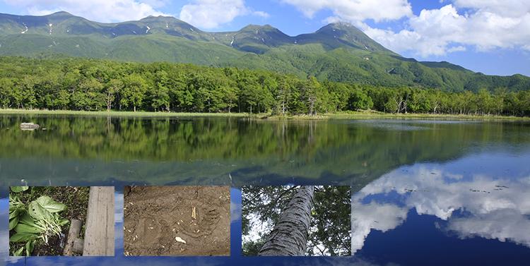 原生林に点在する5つの湖 知床五...